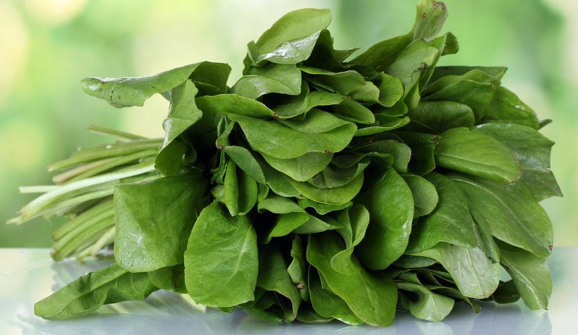 Щавель — 10 простых и вкусных блюд, приготовленных из щавеля