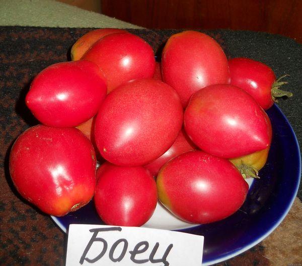 Лучшие сорта помидор для Подмосковья. Описание и отзывы сортов для теплицы и открытого грунта этап 22