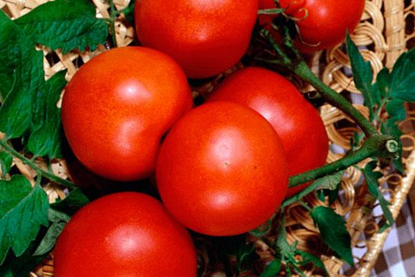 Лучшие сорта помидор для Подмосковья. Описание и отзывы сортов для теплицы и открытого грунта этап 16