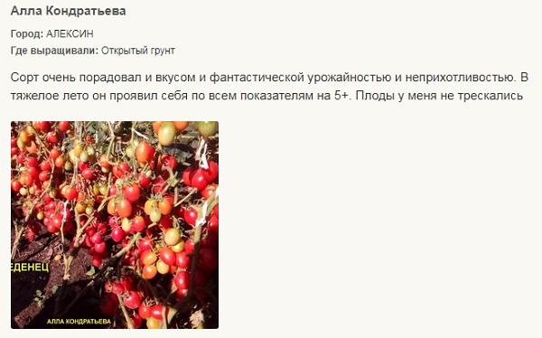 Лучшие сорта помидор для Подмосковья. Описание и отзывы сортов для теплицы и открытого грунта этап 8