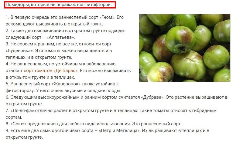 Лучшие сорта помидор для Подмосковья. Описание и отзывы сортов для теплицы и открытого грунта этап 28