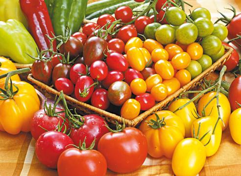 Лучшие сорта помидор для Подмосковья. Описание и отзывы сортов для теплицы и открытого грунта этап 3
