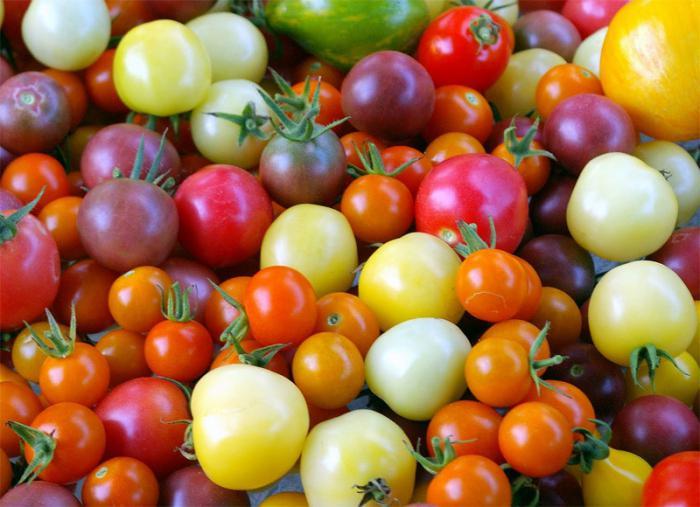 сорта помидоров для подмосковья для открытого
