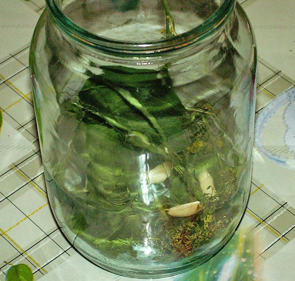 Огурцы соленые на зиму — 6 рецептов хрустящих огурцов в банках этап 27