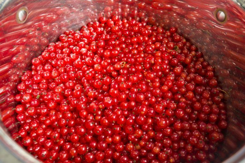 Варенье из красной смородины: 9 простых рецептов на зиму этап 10