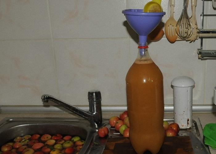 Вино из яблок в домашних условиях — простые рецепты приготовления яблочного вина этап 27