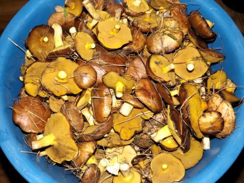 рецепт маринада грибов маслят