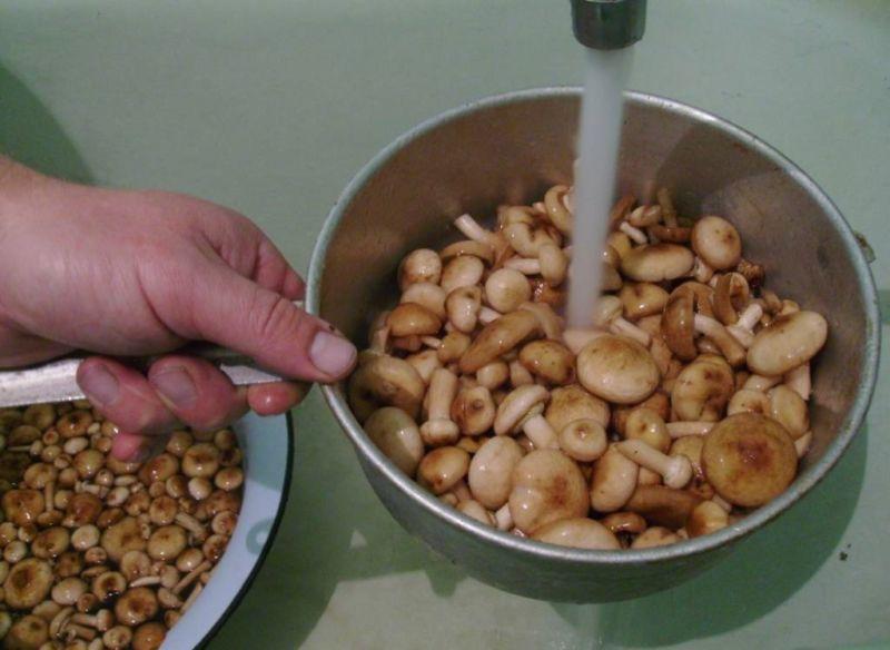 Опята маринованные на зиму в домашних условиях: 6 рецептов быстрого приготовления этап 2