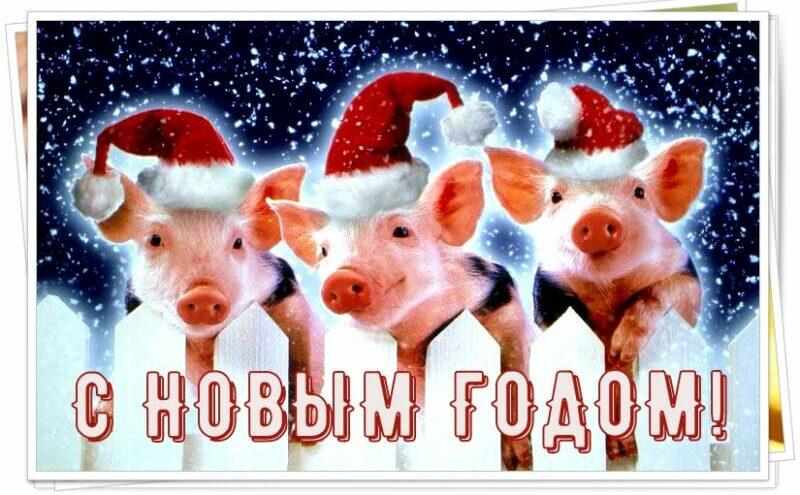 С Новым годом 2019! Поздравления с Новым годом Свиньи в стихах и с картинками этап 1