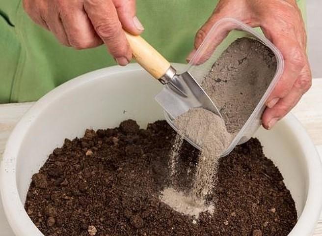 Когда и как сажать капусту на рассаду в 2019 году по Лунному календарю этап 4