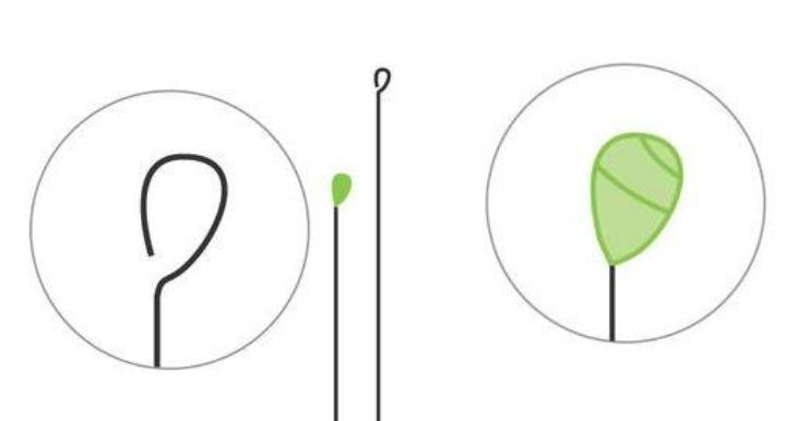 Цветы из бумаги — схемы и шаблоны для создания бумажных цветов этап 5