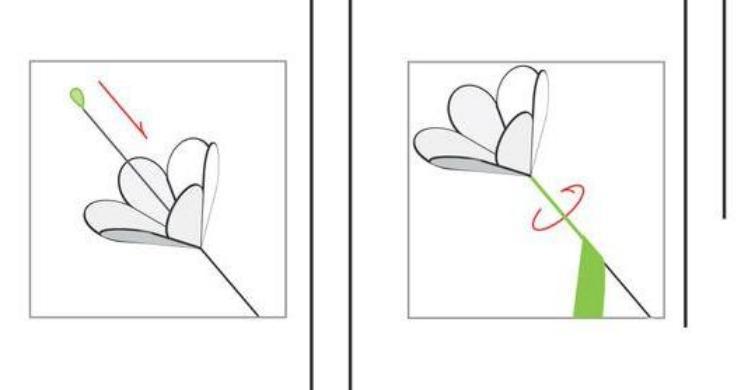 Цветы из бумаги — схемы и шаблоны для создания бумажных цветов этап 6